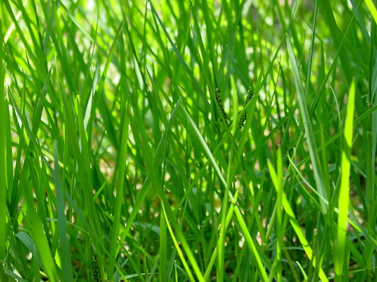 What to Expect - image green-grass-subheader-1 on https://acupuncturerichmond.com.au