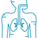 Respiratory System Icon